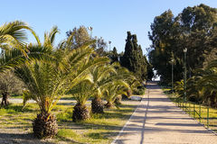 Ajardine o projeto, parque, arbustos da palma ao longo da estrada Imagens de Stock Royalty Free
