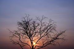 Ajardine o ramo de árvore inoperante no céu, fundo amarelo do céu, antes do por do sol Foto de Stock Royalty Free