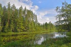 Ajardine o rio da floresta, coberto de vegetação com as almofadas de lírio e os juncos, Imagem de Stock