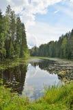 Ajardine o rio da floresta coberto de vegetação com os lírios e os juncos de água e Imagens de Stock
