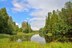 Ajardine o rio da floresta coberto de vegetação com os lírios e os juncos de água e Fotos de Stock Royalty Free
