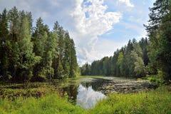 Ajardine o rio da floresta coberto de vegetação com os lírios e os juncos de água e Imagem de Stock