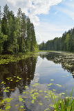 Ajardine o rio da floresta coberto de vegetação com os lírios e os juncos de água e Imagem de Stock Royalty Free