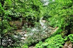 Ajardine o rio da montanha com as rochas grandes na costa Fotos de Stock Royalty Free