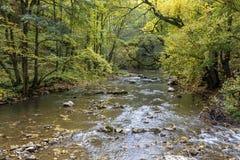 Ajardine o rio da montanha na floresta transylvanian do outono os Carpathians Fotografia de Stock