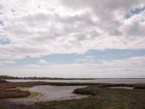 Ajardine o tiro do ambiente do beira-mar onde os pássaros descansam e se aninham Fotos de Stock Royalty Free