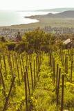 Ajardine para uma linha da uva na primavera em Hungria Fotografia de Stock Royalty Free