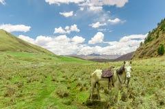 Ajardine pela pastagem do tagong com o cavalo em Sichuan Imagem de Stock Royalty Free
