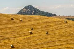 Ajardine perto de Volterra (Toscânia) no verão Imagem de Stock Royalty Free