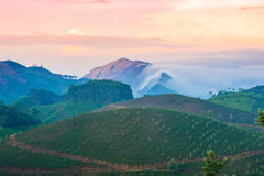 Ajardine com as plantações e as montanhas de chá em um embaçamento do pre-alvorecer Fotografia de Stock Royalty Free