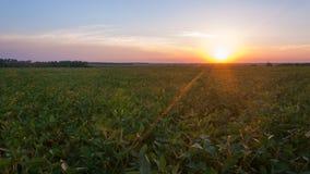 Ajardine, por do sol ensolarado bonito em um campo Fotos de Stock Royalty Free