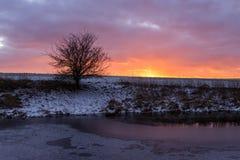 Ajardine por una pequeña charca y una silueta seca con las nubes coloridas de la puesta del sol, naranja, rosa, amarillo, púrpura fotos de archivo