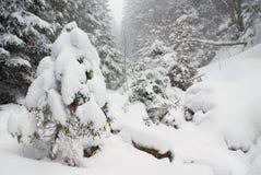 Ajardine a queda de neve em uma floresta conífera densa selvagem, uma árvore de abeto pequena coberta com a neve Fotos de Stock Royalty Free