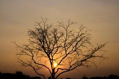 Ajardine, ramo de árvore inoperante no céu, fundo amarelo do céu, antes do por do sol Fotos de Stock