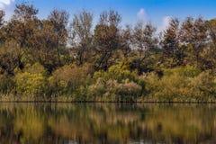 Ajardine a reflexão do árvores de florescência em uma água Fotos de Stock Royalty Free