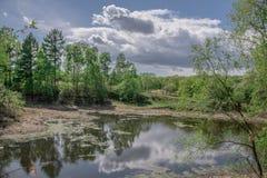 Ajardine, salte na costa do lago as flores amarelas dos dentes-de-leão Fotos de Stock Royalty Free