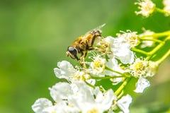 Ajardine, salte na costa do lago as flores amarelas dos dentes-de-leão Foto de Stock
