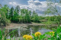 Ajardine, salte na costa do lago as flores amarelas dos dentes-de-leão Fotografia de Stock