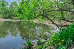 Ajardine, salte na costa do lago as flores amarelas dos dentes-de-leão Imagens de Stock