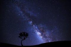 Ajardine a silhueta da árvore com galáxia da Via Látea e dus do espaço Fotos de Stock Royalty Free