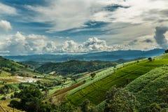 Ajardine, terraços do arroz do Pa Pong Piang de Tailândia Foto de Stock