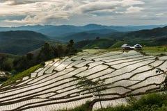 Ajardine, terraços do arroz do Pa Pong Piang de Tailândia Imagem de Stock