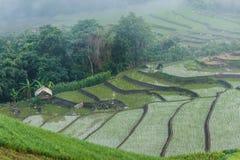 Ajardine, terraços do arroz do Pa Pong Piang de Tailândia Fotografia de Stock