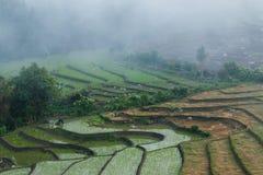 Ajardine, terraços do arroz do Pa Pong Piang de Tailândia Fotos de Stock Royalty Free