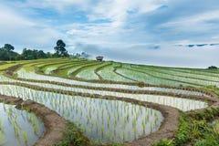 Ajardine, terraços do arroz do Pa Pong Piang de Tailândia Fotografia de Stock Royalty Free