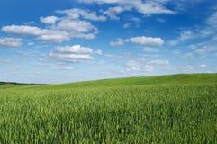 Ajardine un campo de una nube Fotografía de archivo libre de regalías
