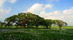 Ajardine a vista ao lago Tissa com as árvores e as flores de lótus, Tissamaharama, Sri Lanka imagens de stock