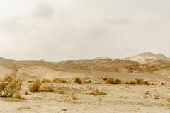 Ajardine a vista cênico em rochas selvagens da natureza e lixe-a no deserto seco em Israel Fotografia de Stock