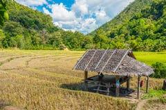 Ajardine a vista da cabana de madeira no campo de almofada com montanha Imagem de Stock
