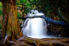 Ajardine a vista da cachoeira e da árvore velha perto da estrada a Hana, Maui Imagem de Stock