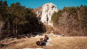 Ajardine a vista da calha molhando de madeira no prado com grama seca Fotos de Stock Royalty Free