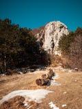 Ajardine a vista da calha molhando de madeira no prado com grama seca Imagens de Stock