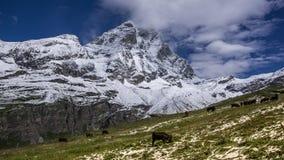 Ajardine a vista da cara sul do Matterhorn Foto de Stock Royalty Free