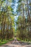 Ajardine a vista da estrada e dos pinheiros no jardim botânico Imagens de Stock