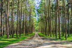 Ajardine a vista da estrada e dos pinheiros no jardim botânico Fotos de Stock Royalty Free