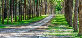 Ajardine a vista da estrada e dos pinheiros no jardim botânico Foto de Stock Royalty Free