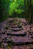 Ajardine a vista da floresta de bambu e do trajeto áspero, Maui Fotografia de Stock