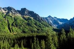ajardine a vista da montanha da rocha e da floresta verde Imagem de Stock