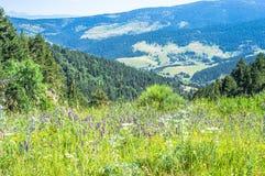 Ajardine a vista das montanhas de Pyrenees com o prado colorido bonito Fotografia de Stock