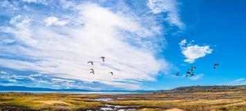 Ajardine a vista de Calafate, uma cidade no Patagonia, Argentina Fotos de Stock
