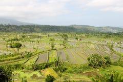 Ajardine a vista de explorações agrícolas asiáticas do arroz com trabalhadores e casas Fotografia de Stock Royalty Free