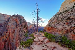 Ajardine a vista de gargantas do arenito de Zion e da árvore seca, Utá, EUA Imagens de Stock Royalty Free