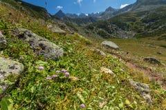 Ajardine a vista de montanhas de Kackar em Rize, Turquia Imagem de Stock