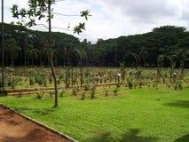 Ajardine a vista de um jardim com grama verde Fotografia de Stock Royalty Free
