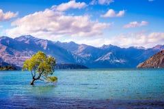 Ajardine a vista dessa árvore de Wanaka, Nova Zelândia Imagem de Stock