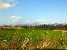Ajardine a vista do campo de grama do campo, da árvore com azul-céu e da nuvem Foto de Stock